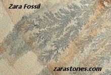 Zara Fossil Wall Coping Stones